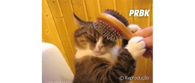 Gato se esfregando em escova de cabelo
