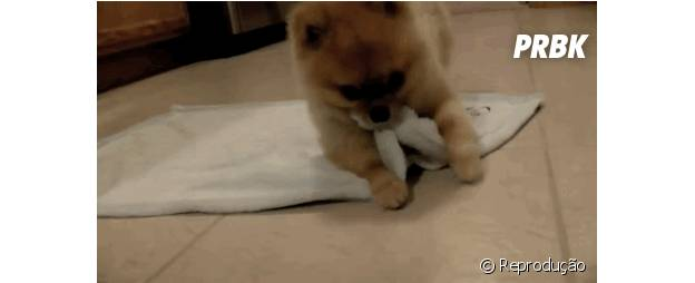 Cachorro se enrolando no cobertor
