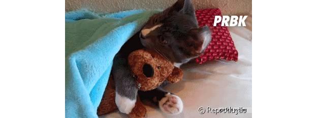 Gato abraçado com ursinho de pelúcia