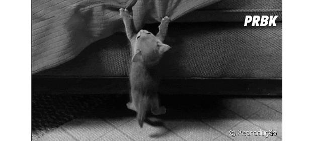 Gato pendurado pela unha no endredom da cama