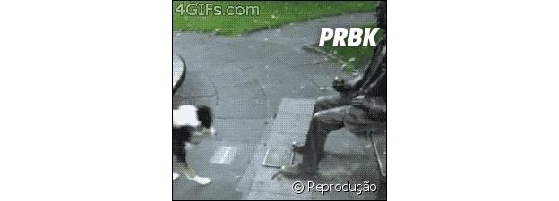 Cachorro tentando brincar com estátua