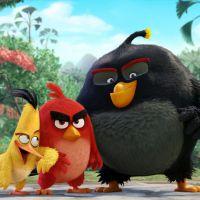 """""""Angry Birds - O Filme"""": veja a primeira imagem e quem vai dublar os personagens"""