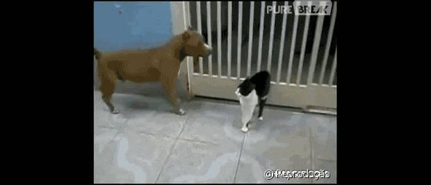 Tópico de combates do Reino Animal 43389-esse-cachorro-nao-e-pareo-para-as-620x0-1