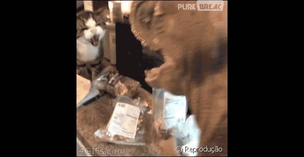 Tópico de combates do Reino Animal 43391-o-dia-em-que-o-trex-deixou-de-ser-o-620x0-1