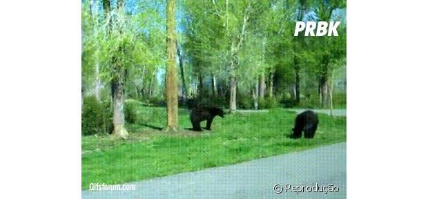 Tópico de combates do Reino Animal 43392-urso-bebado-brigando-com-outro-urso-620x0-1