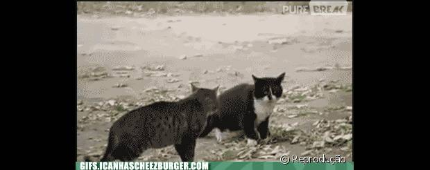 Tópico de combates do Reino Animal 43396-cachorro-separando-briga-de-gatos-620x0-1