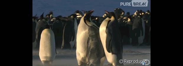 Tópico de combates do Reino Animal 43400-pinguins-conseguem-ser-fofos-ate-620x0-1