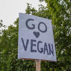 Você sabe a diferença entre vegetariano e vegano? Vem aqui que a gente explica tudinho