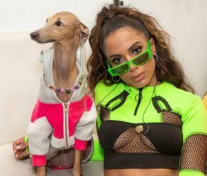 Plínio tá famoso! Cachorro de Anitta leva prêmio no MTV Miaw 2019
