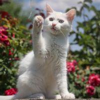 Esta lista vai mostrar exatamente todos os mitos e verdades sobre os gatos!