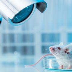 Montamos uma lista com as marcas que não fazem testes em animais para você se conscientizar