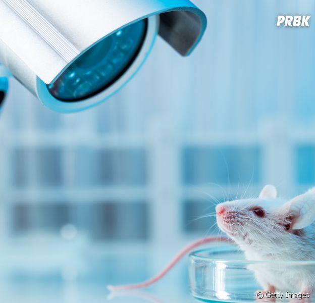 Veja lista de marcas que não fazem testes em animais