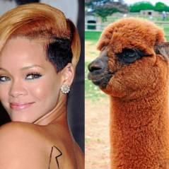 Rihanna, Justin Bieber e outras celebridades que são parecidas com animais! Oi?
