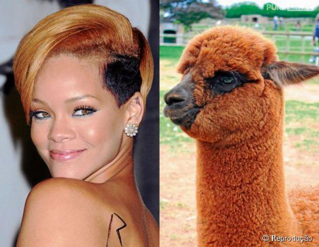 Rihanna ou seria Rilhama? Ficamos na dúvida na hora de ver essa galeria com animais parecidos com famosos