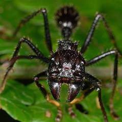 Quais são os 10 insetos mais perigosos do mundo? Porque tamanho não é documento!