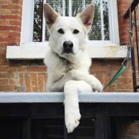 Seu bichinho te persegue o tempo todo? Veja 21 cachorros que estão julgando seus donos!