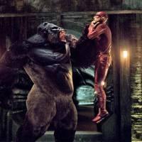 """Em """"The Flash"""": na 3º temporada, Gorilla Grodd pode ser o grande vilão no futuro da série!"""