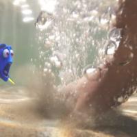 """De """"Procurando Dory"""": em novo trailer divulgado, protagonista vai parar em um aquário marinho!"""