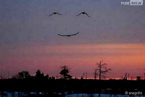 """Três pássaros voando juntos formam """"sorriso"""" no céu"""