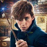 """Personagem de """"Harry Potter"""" vai aparecer no filme """"Animais Fantásticos e Onde Habitam 2"""""""