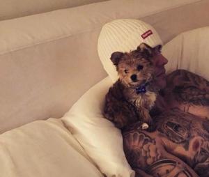 Oscar, cachorrinho de Justin Bieber e Hailey Baldwin, sofreu agressão da modelo?